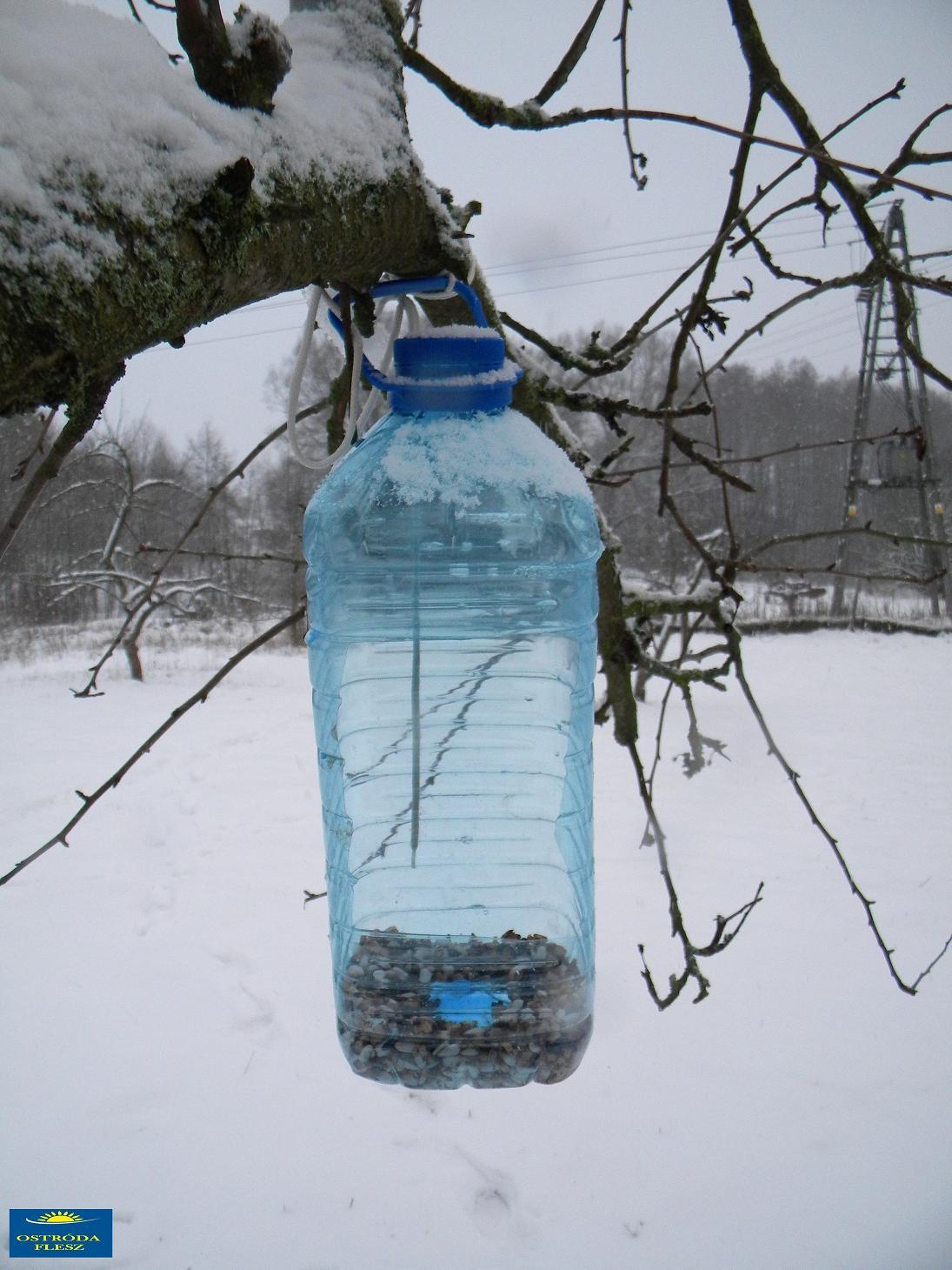 Jak Zrobić Karmnik Z Butelki Na Wodę Ostróda Flesz